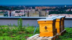 "Bees – new ""tenants"" of myhive Nimbus"